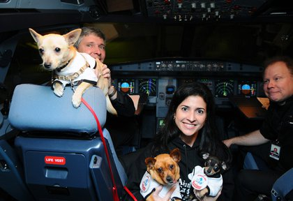 Chihuahuas in the Virgin America cockpit before taking off this morning from SFO.