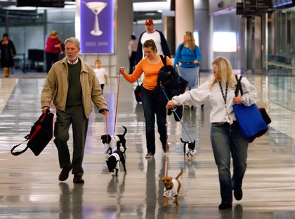 Neil Mosher, left, Erika Slovikoski, center, and Sarah Buckenberger walk Chihuahuas through the terminal for a New York bound flight at San Francisco International airport.