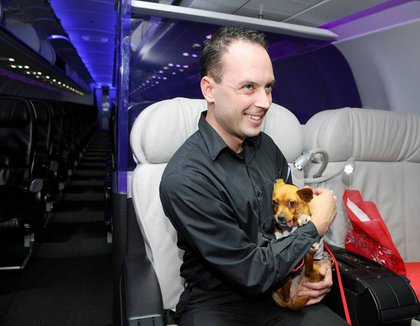 Virgin America teammate Casey Hurst cuddles 'Colette' one of fifteen Chihuahua pups being flown to New York so they can be adopted into loving homes