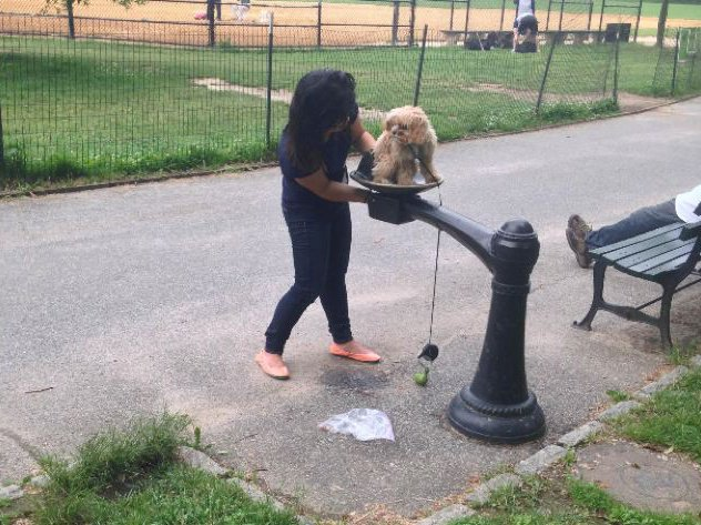 Central Park Drinking Fountain Doubles As Dog Bidet - Gothamist