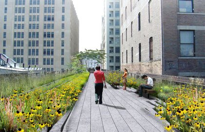"""A straight walkway, running alongside the railroad tracks, is surrounded by a landscape of native species that once grew spontaneously on the High Line, interspersed with new species that ensure bloom throughout the growing season."""