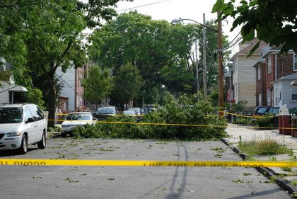 Downed trees in the Bronx