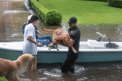 Volunteers and officers from the neiborhood security patrol help to rescue residents and their dogs in the upscale River Oaks neighborhood after it was inundated with flooding from Hurricane Harvey on August 27, 2017 in Houston, Texas. <br>(Getty Images)