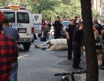 "On Twitter, AlixL writes, ""Ok they got horse on Columbus avenue. They just tranquilized him I hope :("""