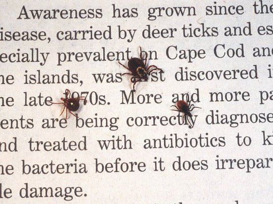 And now, a new reason to fear ticks.