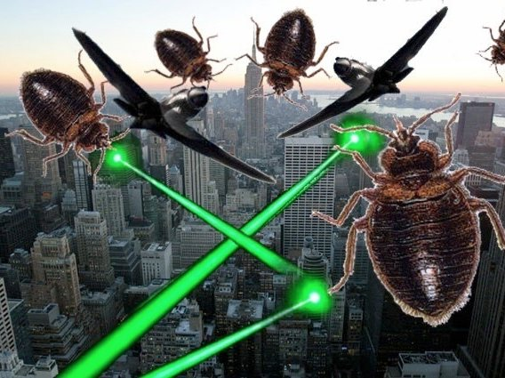 Ask A Native New Yorker: A Friend Has Bedbugs   Can I
