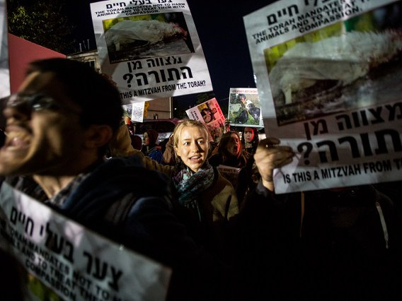 Animal Holocaust!': Protests Against Ritual Jewish Chicken