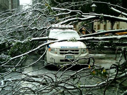"""""""#nypd car by 59th street, under a treet branch."""""""