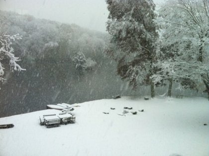 """Mia Farrow tweets: """"Snow. From our upstairs window."""""""