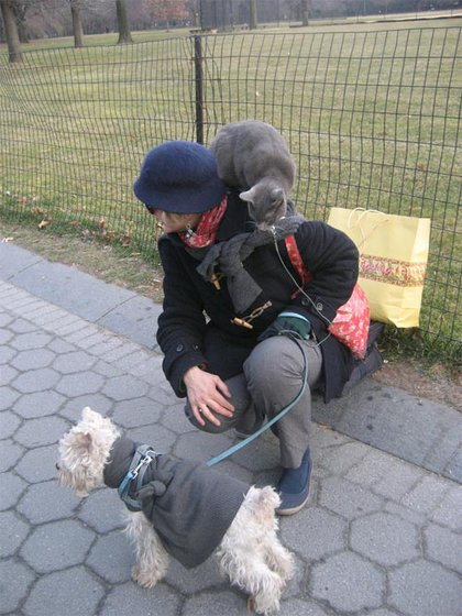 Seen at Central Park - a dog on a leash and a cat on a leash.
