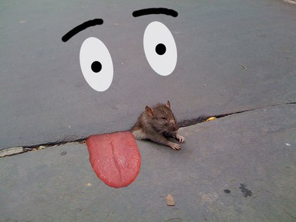 """Rafael says the rat """"never had a chance"""""""