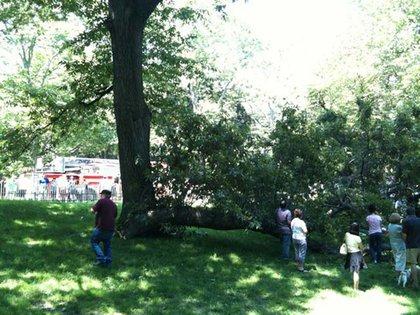 A fallen tree branch in Central Park