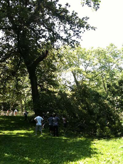 In this photograph, you can see where the branch fell from.