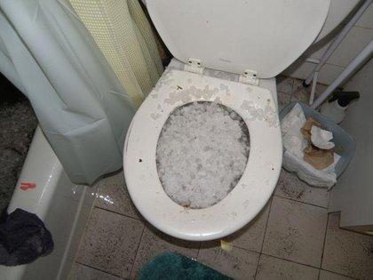 Hail grows in Brooklyn toilet