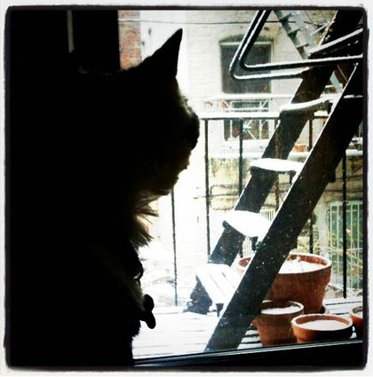 Cat observes the falling snow