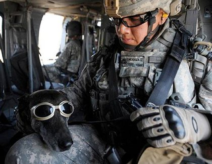 A trainer pets Rico, in doggles, aboard a helicopter.