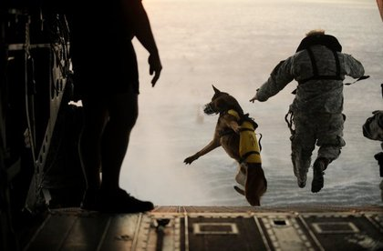 A war dog and his trainer go for a jump.