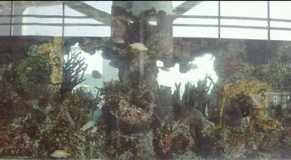 One of the fish tanks, as it appeared the morning of July 11, 2011.