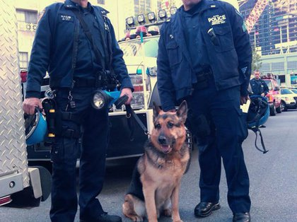 K9 dog TC patrols the area near Ground Zero
