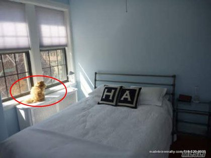 Weiner's bedroom—with a pussy by the window