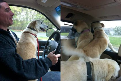 Sunshine, Vegas, and Cinnamon are very excited to go for a drive.