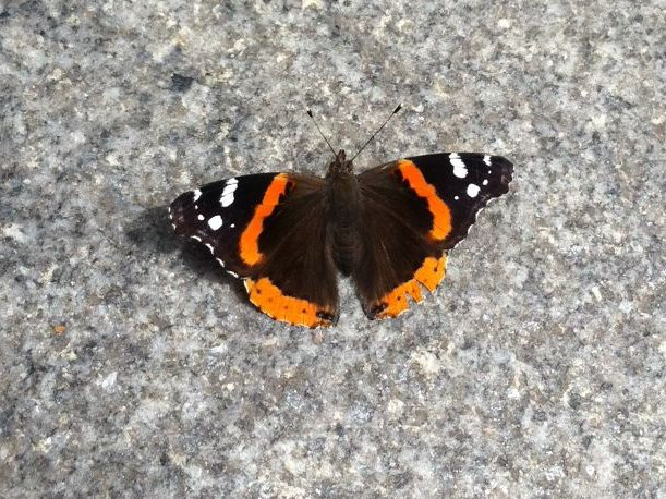 Alert: 'Butterflies Of Doom' Have Reportedly Returned To NYC