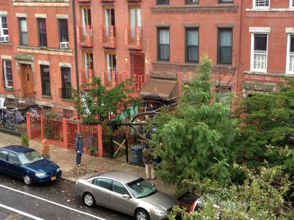 Downed tree on Degraw Street in Brooklyn