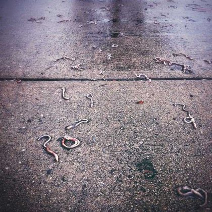 Worms on the street