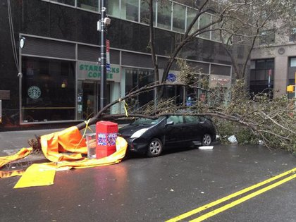 Prius gets tree on Maiden Lane
