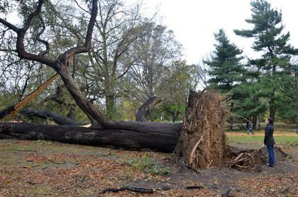 Another angle of that downed tree in Prospect Park
