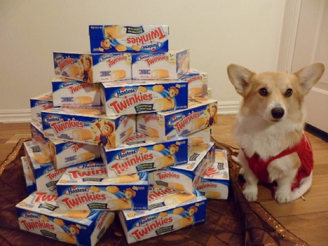 Trinket loves Twinkies, but he probably doesn't need to keep stocking up now.