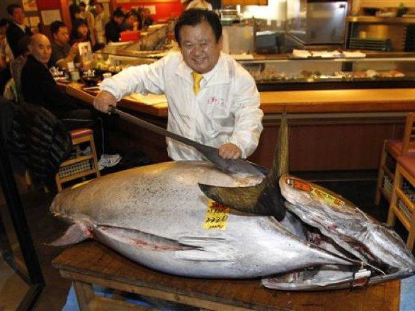Photos What A 1 7 Million Bluefin Tuna Looks Like Gothamist