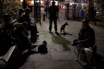 Dog owners gather in a lower Manhattan alley for their dogs to kill rats