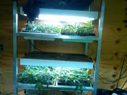 Inside the Queens grow house