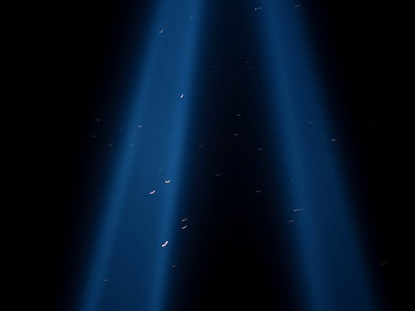 Photograph of birds flying through the Tribute in Light in 2010 by Dan Nguyen on Flickr