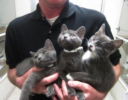 Dmitry, Inessa, and Ilyo with ASPCA Adoption Center staff member.