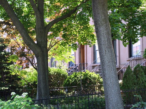 Cobble Hill has the most trees per square mile in New York City.