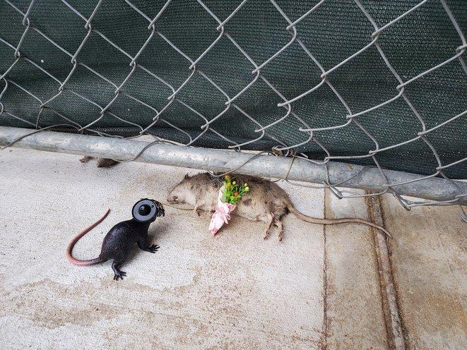 Rat Funeral 2019