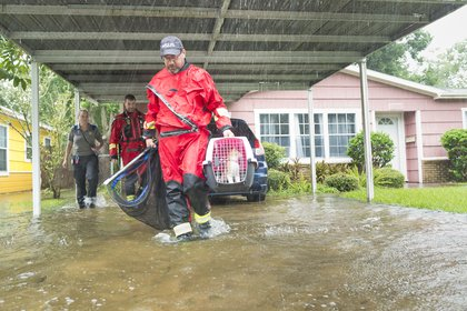 An HSUS rescue team with animals  (AP Images for HSUS)