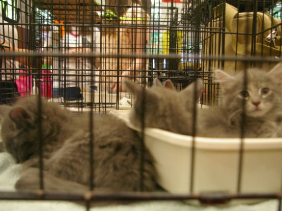 NYC Was Supposed To Be A 'No Kill' Animal Shelter City By