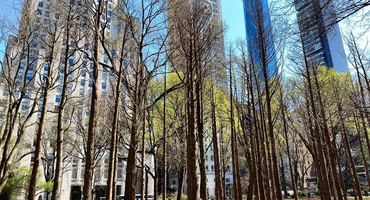 "Maya Lin's ""Ghost Forest"" Installation Brings Dead Trees From Pine Barrens To Madison Square Park"