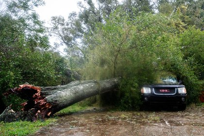 A downed tree from high winds rests against a car in a residential community after Hurricane Matthew passes through on October 7, 2016 in Ormond Beach (Getty Images)