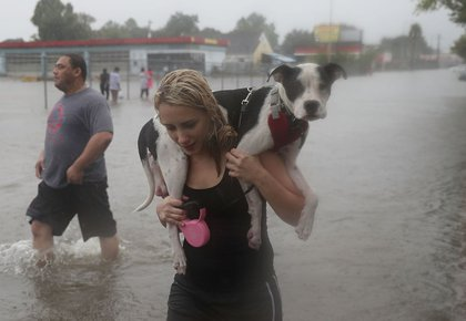 Naomi Coto carries Simba on her shoulders as they evacuate their home after the area was inundated with flooding from Hurricane Harvey on August 27, 2017 in Houston, Texas. Harvey, which made landfall north of Corpus Christi late Friday evening, is expected to dump upwards to 40 inches of rain in Texas over the next couple of days.<br>(Getty Images)