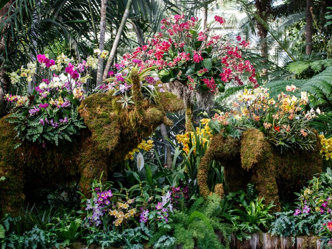 Photos Jaw Dropping Display Of Flora For Nybg S Thailand Orchid