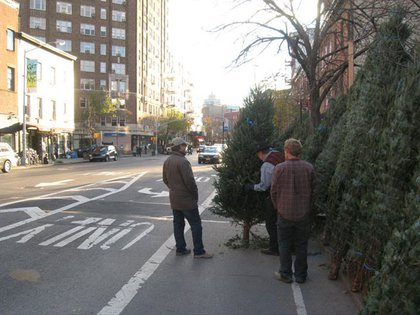 """""""Your Christmas tree is in my bike lane!"""""""