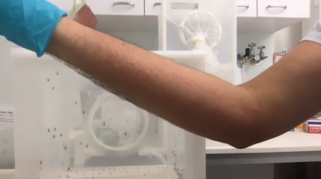 Neurogeneticist Nipun Barsur's arm shows welts from dozens of mosquito bites.