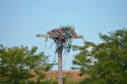 Osprey nest. The birds themselves are gone for the season<br/>