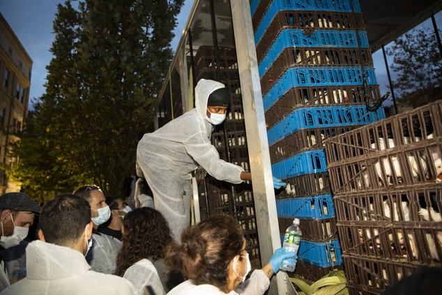 Animal Rights Activists Face Off With Jewish Community Over Treatment Of Chickens During Kaporos