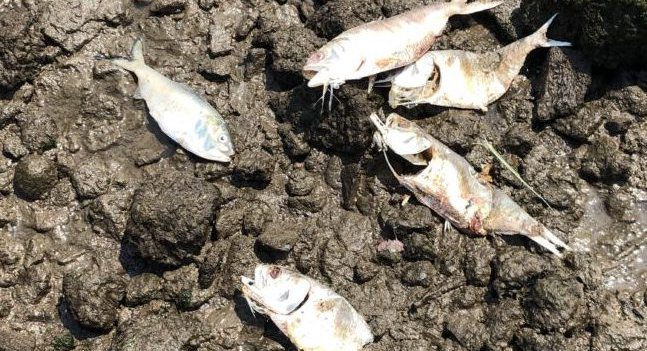 """Sewage, Heat, And Climate Change Causing """"Extreme"""" Hudson River Fish Die-Offs"""