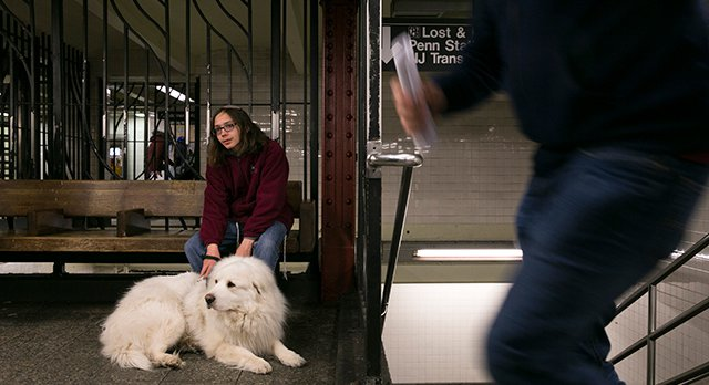 What Commuters With Service Dogs Want